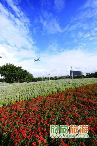 台北国际花卉博览会 王能佑摄